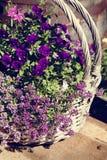 Bukett av blommor i korgen. Fotografering för Bildbyråer