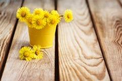 Bukett av blommor moder och styvmor (Tussilà ¡ går), Arkivfoto