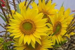 Bukett av blommor av solrosor, havre och andra jordbruks- skördar arkivbild