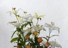 Bukett av blommor som används för beklagande royaltyfri foto