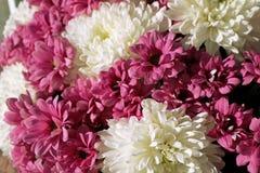 Bukett av chrysanthemums arkivbilder