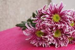 Bukett av chrysanthemums Fotografering för Bildbyråer