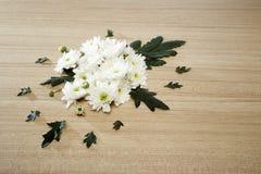 Bukett av chrysanthemums Arkivbild