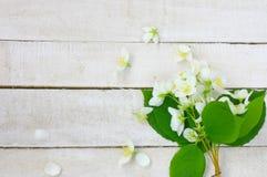 Bukett av den delikata jasminblomman på den vita trätabellen royaltyfri foto