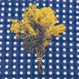 Bukett av den gula mimosan på abstrakt bakgrund Royaltyfri Fotografi