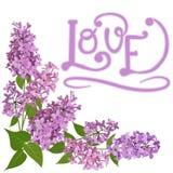 Bukett av den rosa lilan och ordförälskelse royaltyfri illustrationer