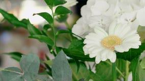 Bukett av den vita gerberaen, hortensia och gröna sidor som dekoren av brölloptabellen lager videofilmer