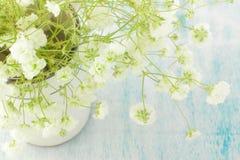 Bukett av den vita gypsophilaen (brudslöjablommor), ljus, luftiga mass av små vita blommor Royaltyfria Bilder