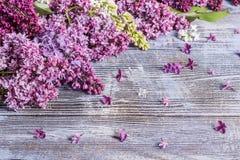 Bukett av en lila Royaltyfria Bilder