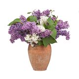Bukett av en lila i keramisk vas på vit royaltyfria bilder