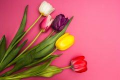 Bukett av färgrika tulpan på en rosa bakgrund fotografering för bildbyråer