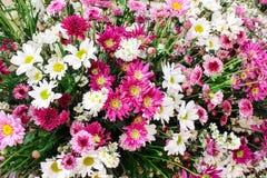 Bukett av färgrikt mångfärgat blomma för blommor royaltyfri bild