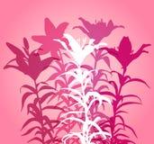 Bukett av fem liljor Arkivfoton