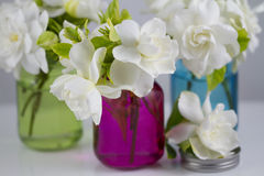 Bukett av gardenior Royaltyfri Fotografi