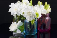 Bukett av gardenior Arkivbilder
