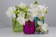 Bukett av gardenior Arkivfoton