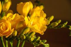 Bukett av gula blommor Arkivbild