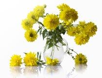 Bukett av gula chrysanthemums Royaltyfria Bilder