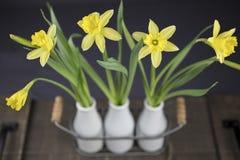 Bukett av gula påskliljar Royaltyfria Foton