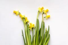 Bukett av gula påskliljor eller pingstliljan arkivbilder