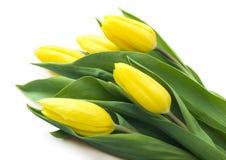 Bukett av gula tulpan, kopieringsutrymme Fjädra nya blommor, modellen för kort för hälsning för moderdag, valentin- eller bröllop Royaltyfri Bild