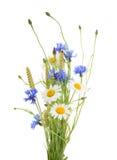 Bukett av härliga blommablåklinter, kamomillveteiso royaltyfria bilder