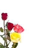 Bukett av härliga blommor Arkivfoton