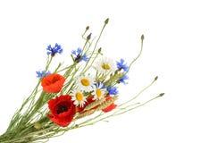 Bukett av härliga blommor som isoleras utan skugga arkivfoton