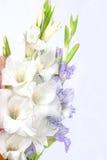 Bukett av härliga färgrika gladioli Arkivfoto