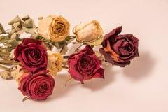 Bukett av härliga torkade gula och röda rosor arkivfoton