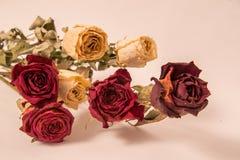Bukett av härliga torkade gula och röda rosor royaltyfri foto