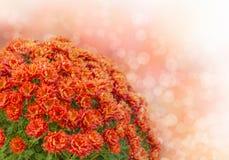 Bukett av höstblommor Royaltyfria Bilder