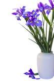 Bukett av irisesblommor royaltyfria foton