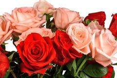 Bukett av isolerade rosa och röda rosor Fotografering för Bildbyråer