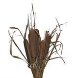 Bukett av isolerade växtvasser Royaltyfria Bilder