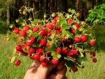 Bukett av jordgubbar fotografering för bildbyråer