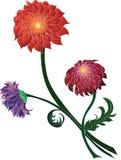Bukett av krysantemum av olika färger Arkivfoto