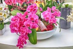 Bukett av lila orkidéblommor Royaltyfri Fotografi