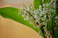 Bukett av liljekonvaljer med regndroppar Royaltyfri Foto