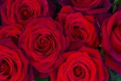 Bukett av mörker - röda rosor Royaltyfria Foton