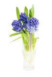 Bukett av nya hyacinter i vasen som isoleras över vit Royaltyfri Fotografi