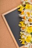 Bukett av olika färger av påskliljor på den tomma svart tavla, ov Royaltyfria Foton