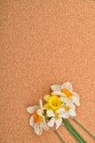Bukett av olika färger av påskliljor på korkbakgrund nat Fotografering för Bildbyråer
