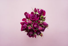 Bukett av purpurfärgade rosor på en rosa bakgrund Royaltyfri Fotografi