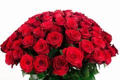 bukett av röd ros som 101 isoleras på vit Royaltyfria Bilder