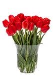 Bukett av röda blommatulpan i vas som isoleras på den vita backgroen Fotografering för Bildbyråer