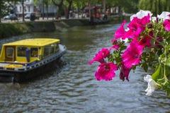 Bukett av röda blommor nära kanalen med det gula fartyget Arkivbild