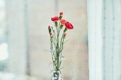 Bukett av röda nejlikor vid fönstret Arkivfoto