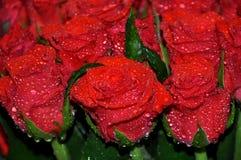 Bukett av röda ro royaltyfria foton