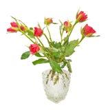 Bukett av röda rosor i en tillbringare Fotografering för Bildbyråer